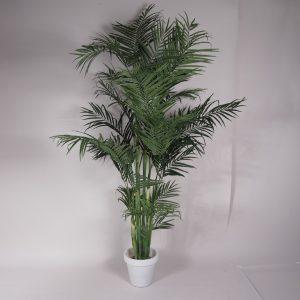 palmen kunst + 2,25    1